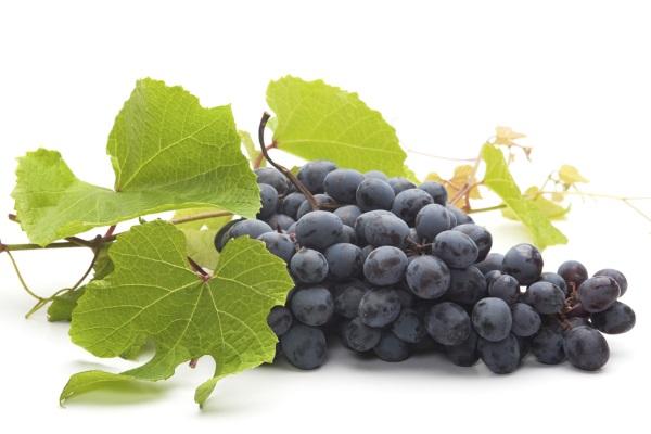 Виноград чрезвычайно богат фенольными веществам