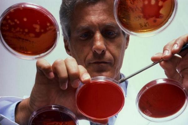 Врач лаборант исследует кровь в чашках петри