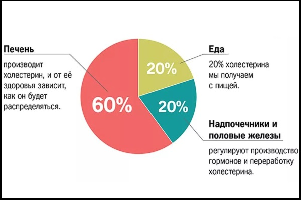 Организм человека производит до 80% холестерина