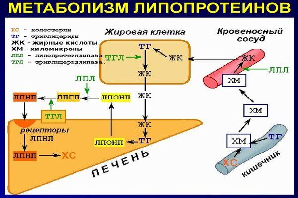 Определение холстерина-ЛПНП по Фридвальду