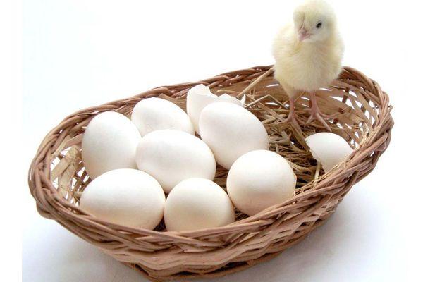 Куриные яйца в плетенной корзине и цыпленок
