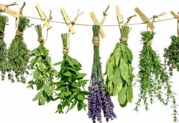 Травы при высоком холестерине для очищения сосудов