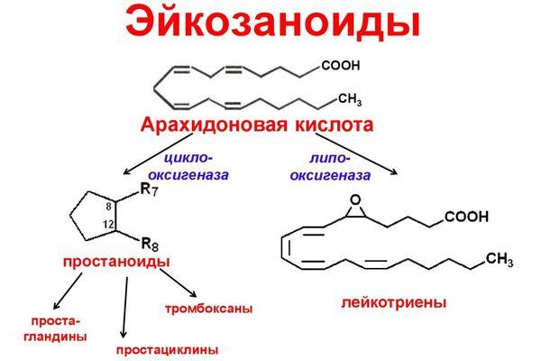Эйкозаноиды